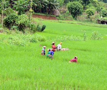 Rice_Farming_Small